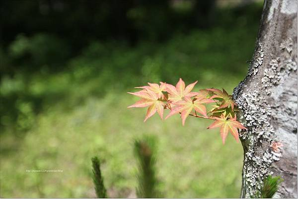 星のや軽井沢部屋篇 (7).JPG