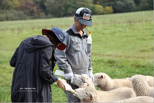 YORKSHIRE FARM (14).JPG