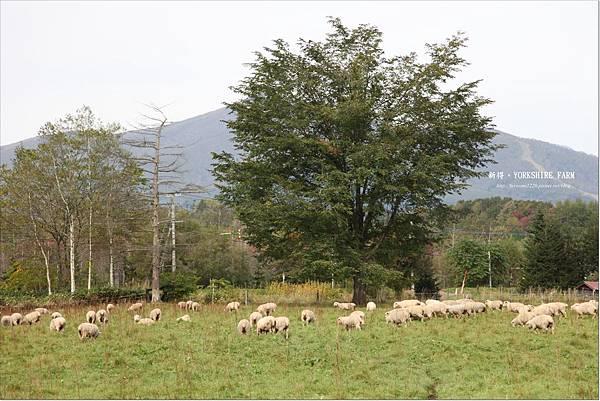 YORKSHIRE FARM (22).JPG