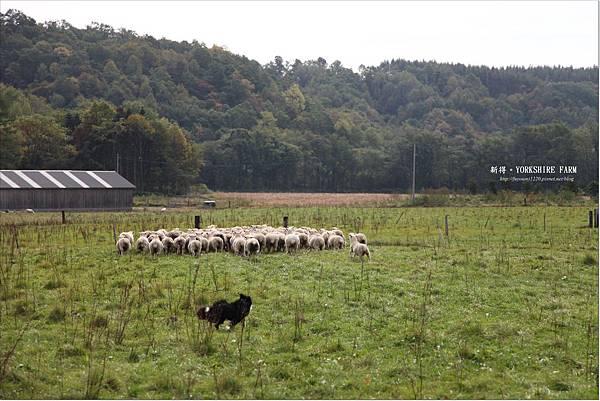 YORKSHIRE FARM (23).JPG