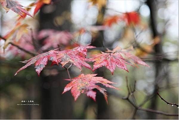 雨訪上高地-河童橋-明神池(41).JPG