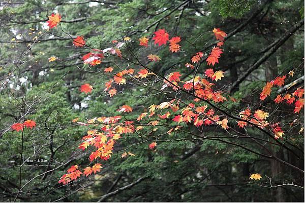 雨訪上高地-河童橋-明神池(44).JPG