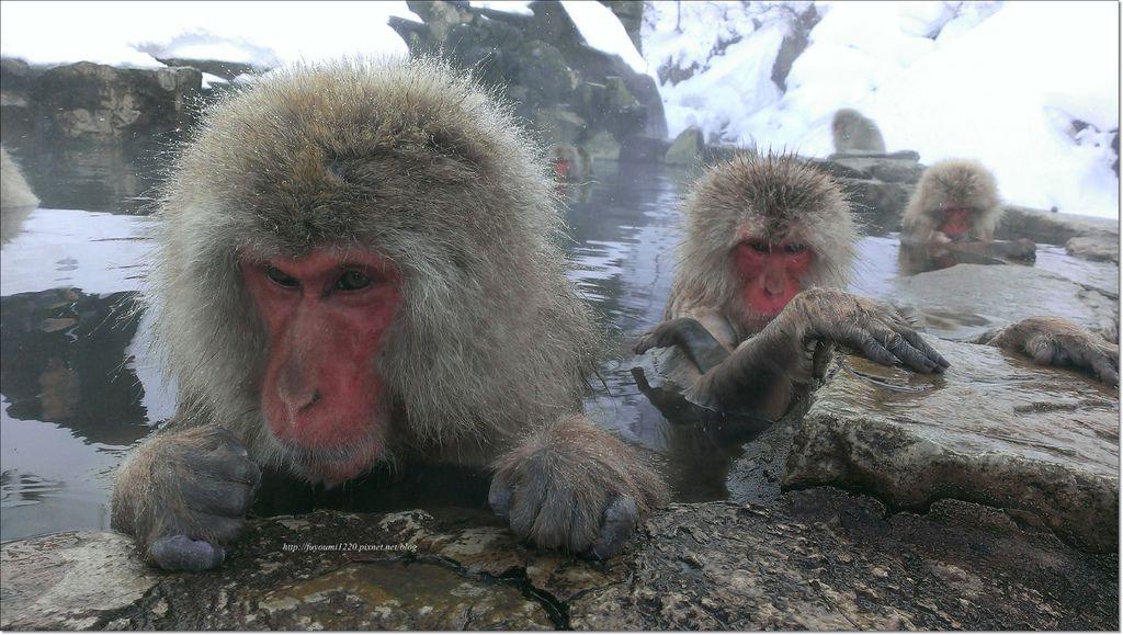 地獄谷野猿 (6).jpg