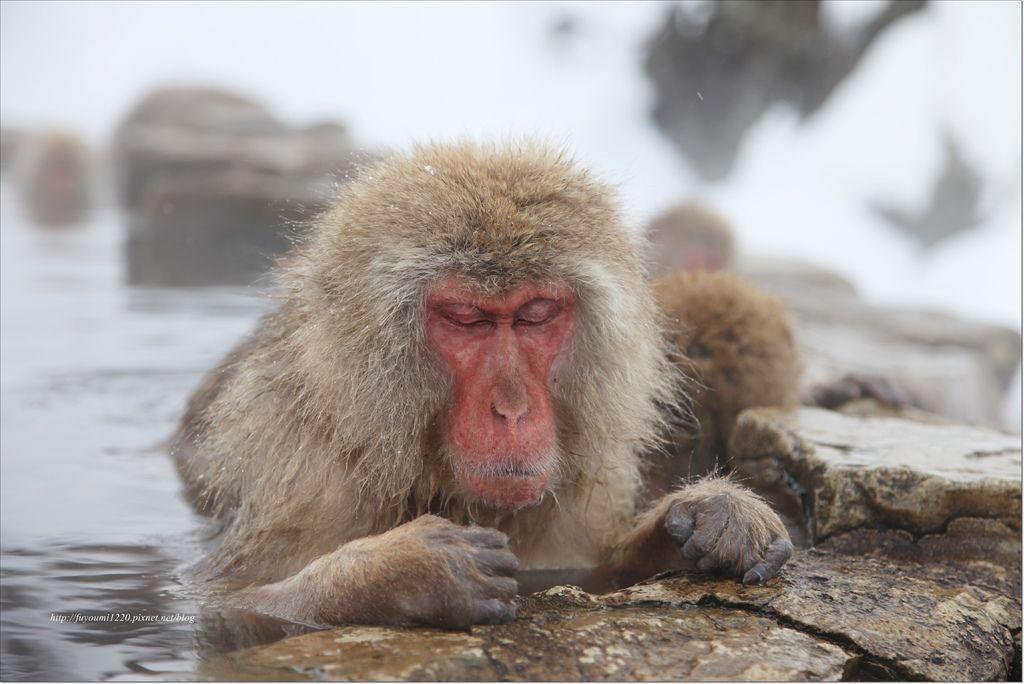 地獄谷野猿 (19).JPG