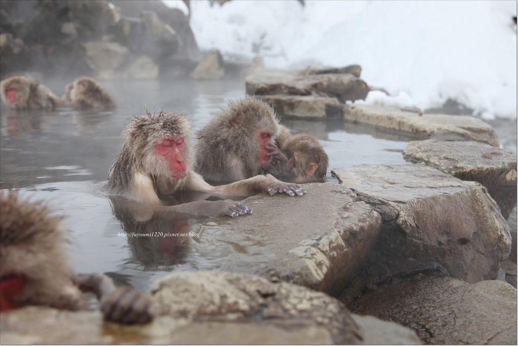 地獄谷野猿 (23).JPG