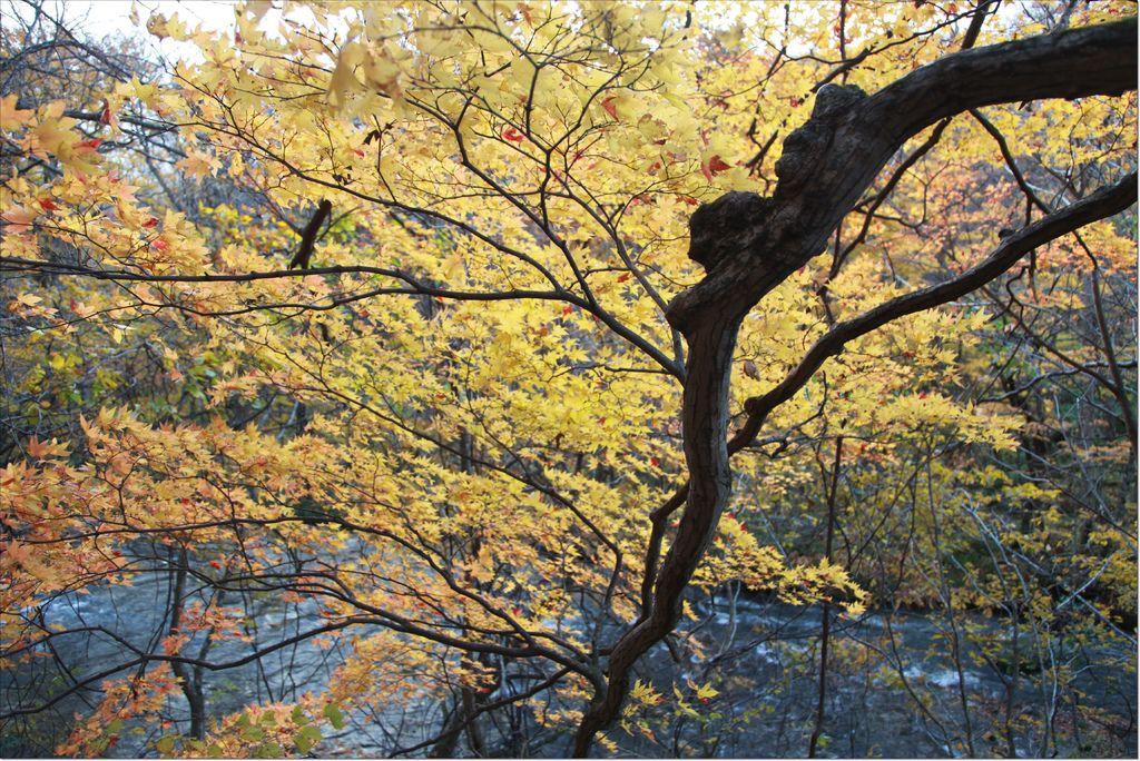 十和田湖+奧入瀨溪流 (10).JPG