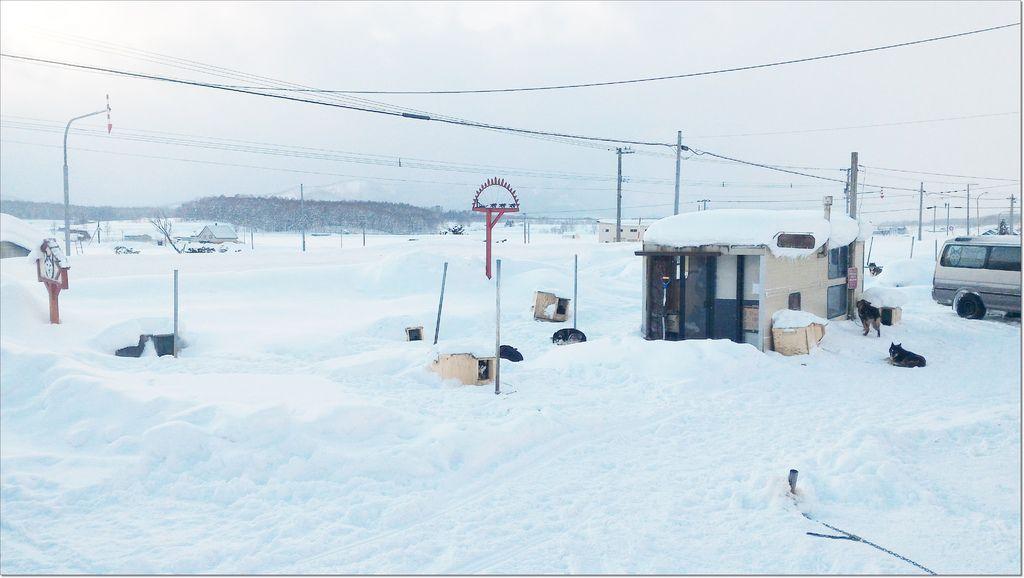2016 旭川犬ぞり (5).jpg