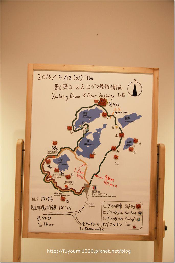 知床熊見 (2).JPG