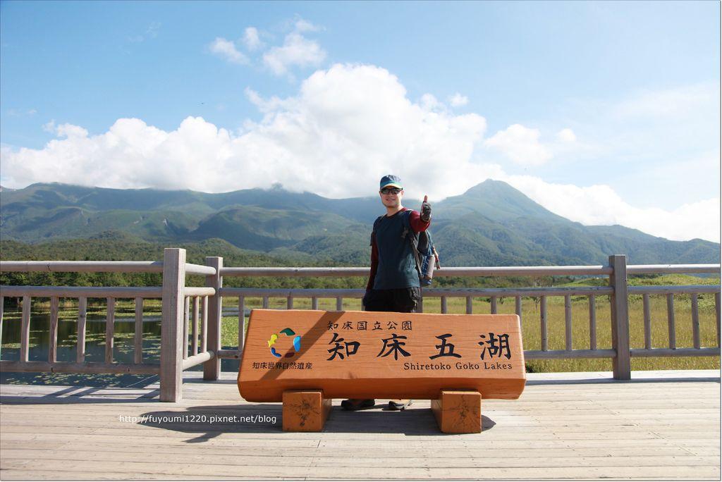 知床熊見 (17).JPG