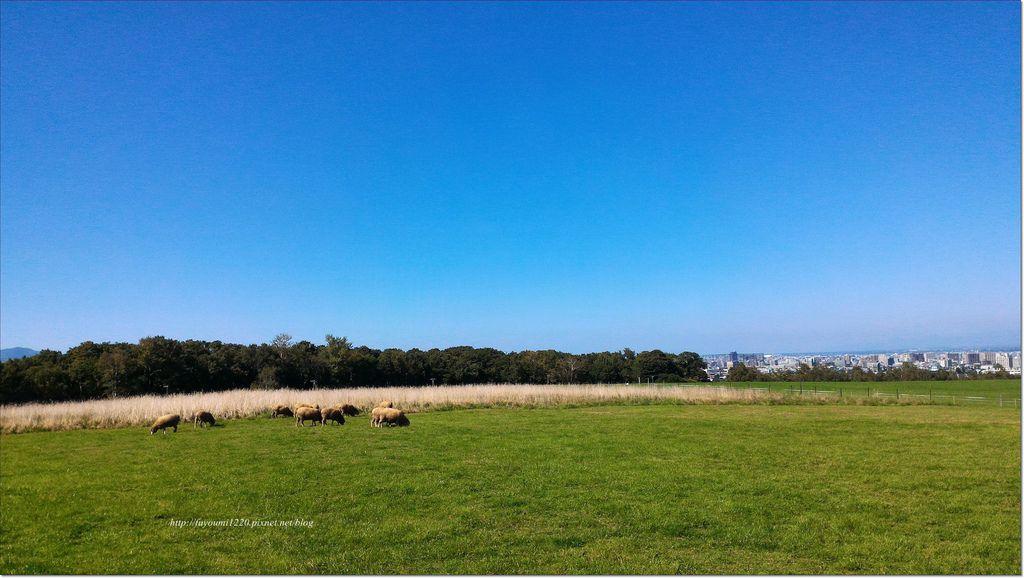 羊之丘展望台 (5).jpg
