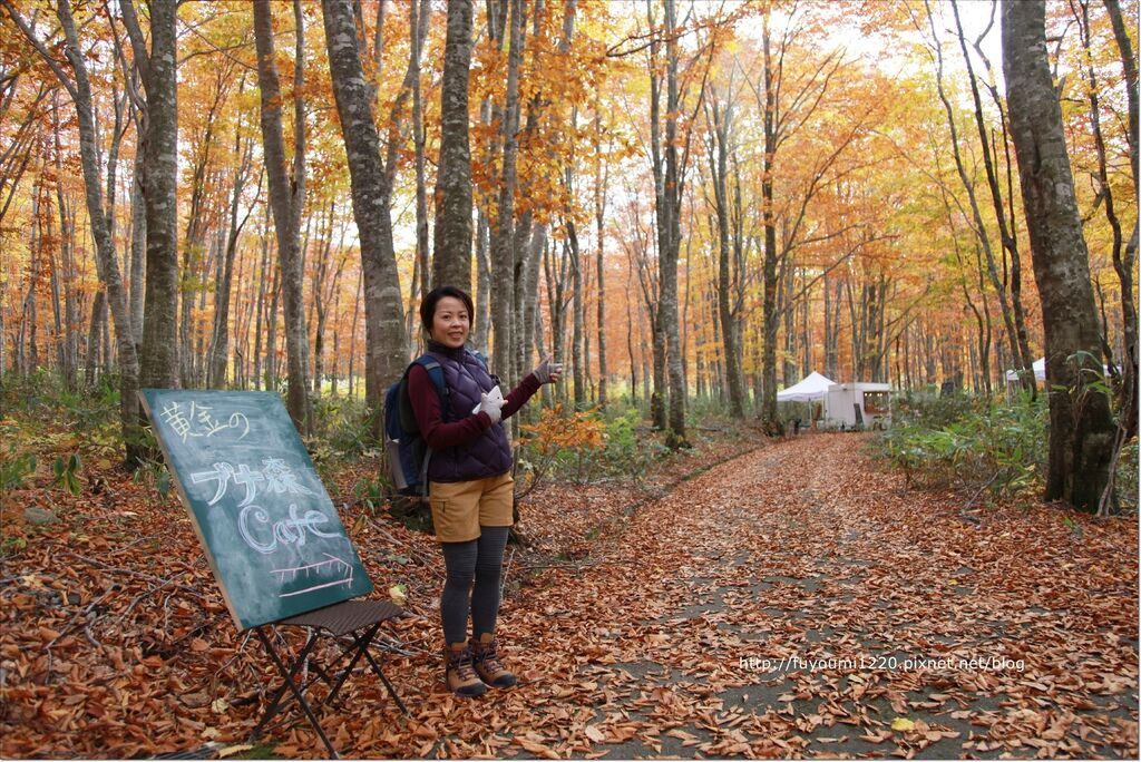 秋楓下的野餐 (2).JPG