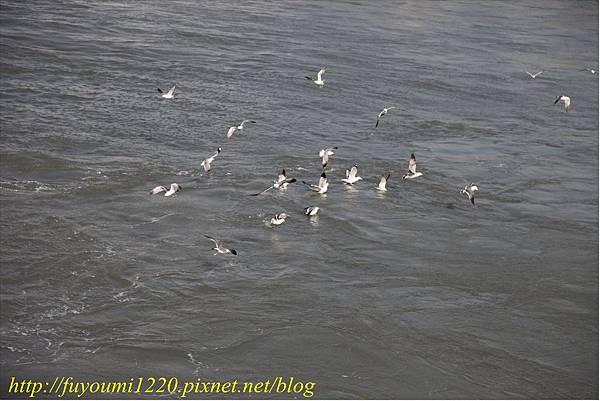 海鷗餵食 (3).JPG