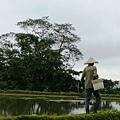 20120726八煙的水田4.jpeg
