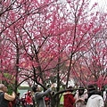 2013春節走春31.jpeg