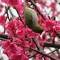 2013春節走春34.jpeg