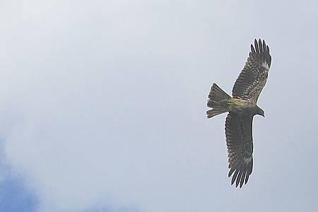 飛翔老鷹4.JPG