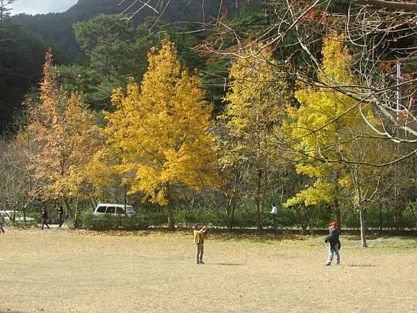武陵20131216306IMG_8906.JPG