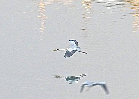 飛翔15IMG_6213.JPG