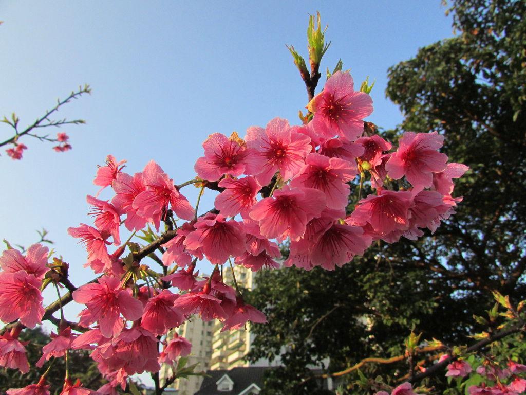 2014春節0402IMG_1986