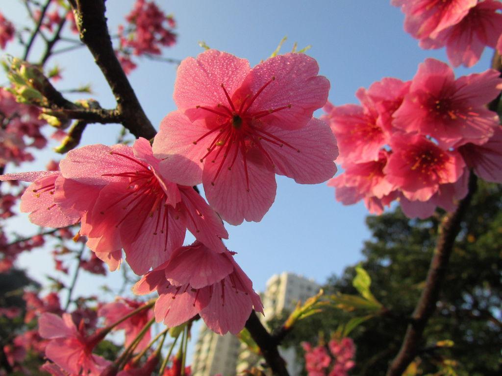 2014春節0403IMG_1987