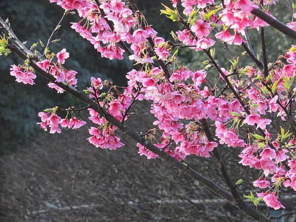 2014春節0401IMG_1983