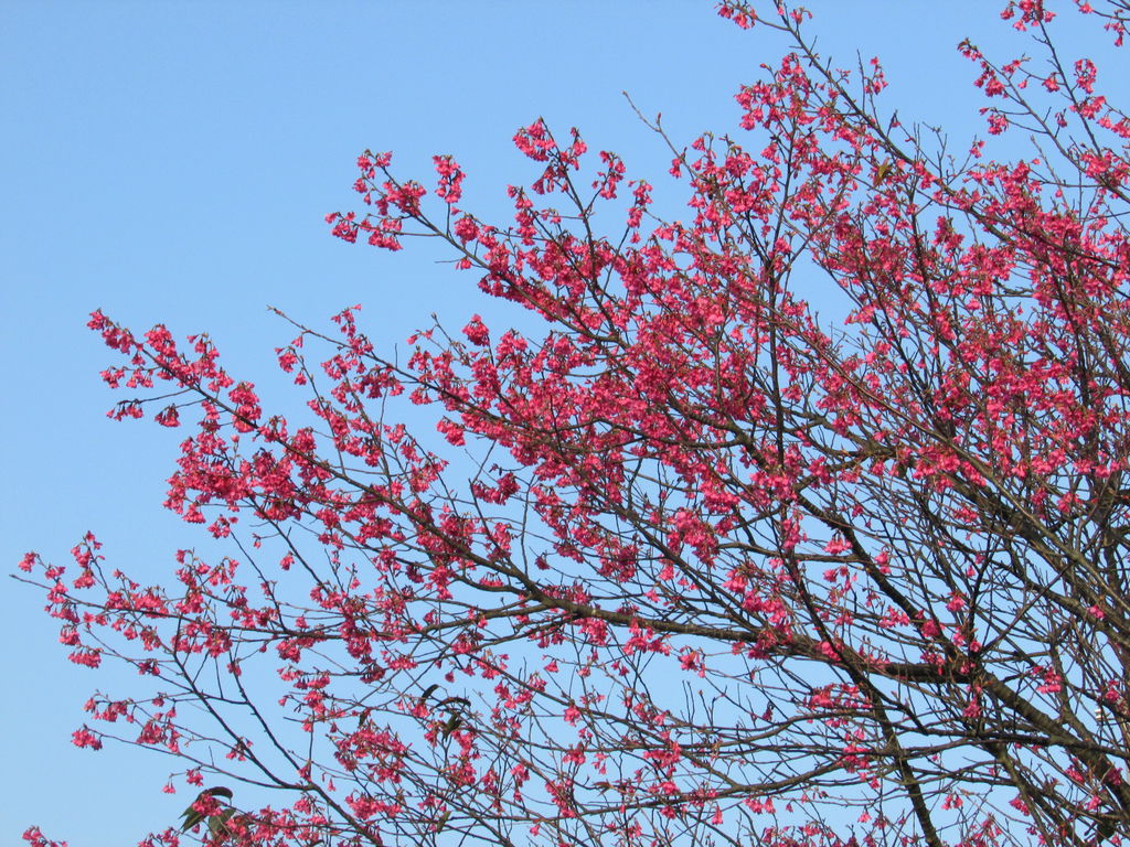 2014春節0701IMG_2059