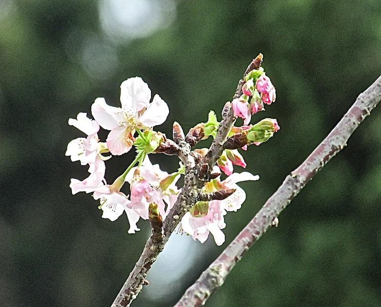 中正堂502IMG_2529.JPG