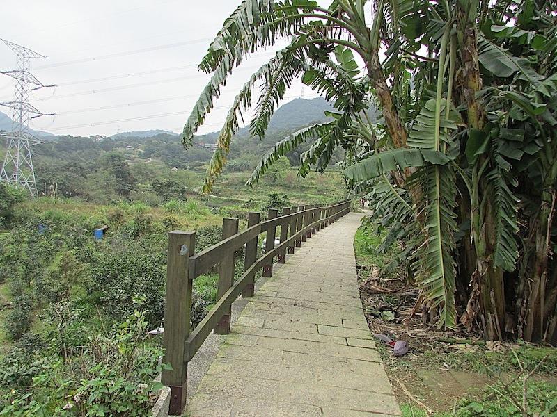 樟樹步道300IMG_2937.JPG