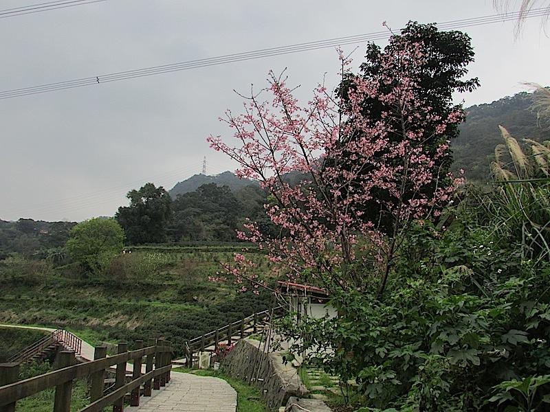 樟樹步道400IMG_2943.JPG
