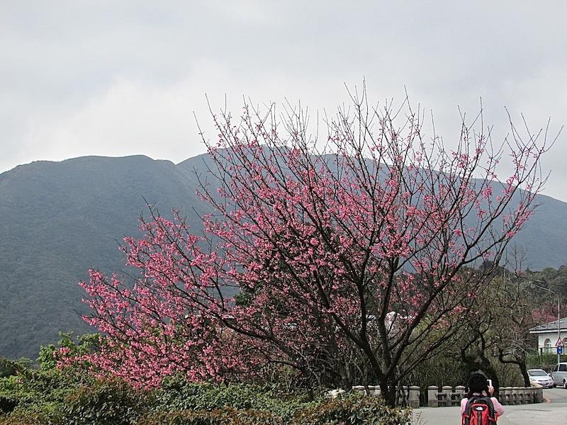 竹子湖203IMG_3174.JPG