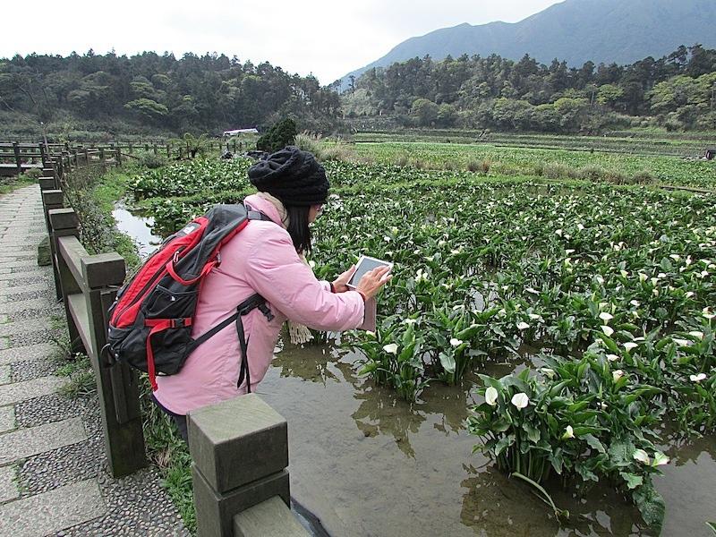 竹子湖303IMG_3213.JPG