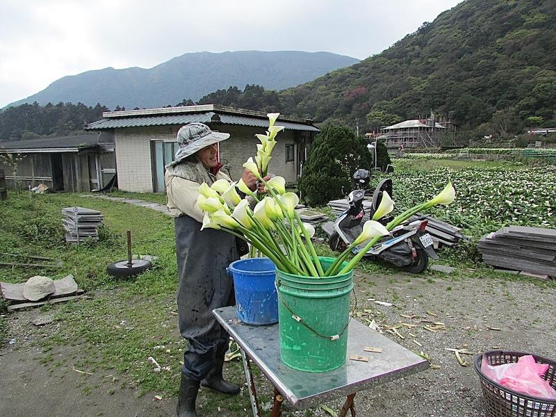 竹子湖400IMG_3249.JPG