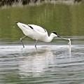 03礁溪拍鳥.jpg