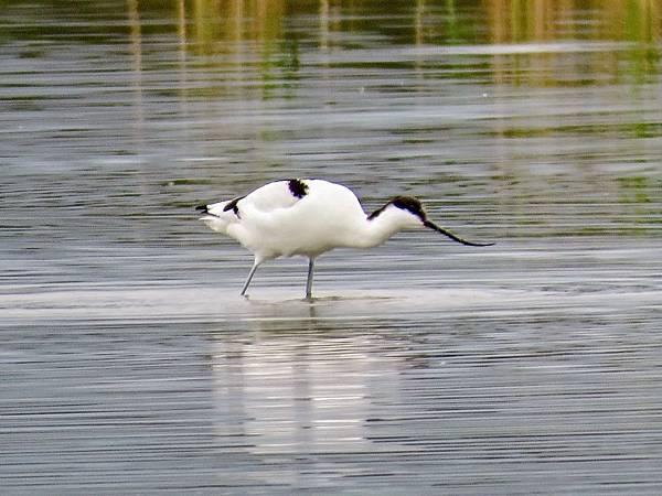 01礁溪拍鳥.jpg
