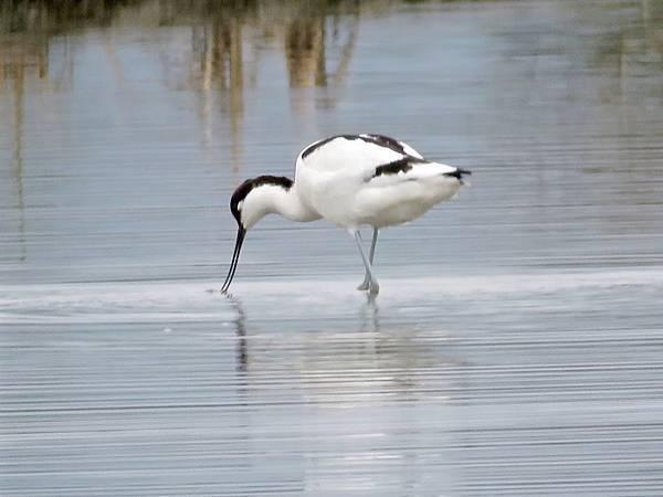 02礁溪拍鳥.jpg