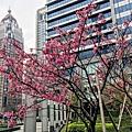 松壽公園09.jpg