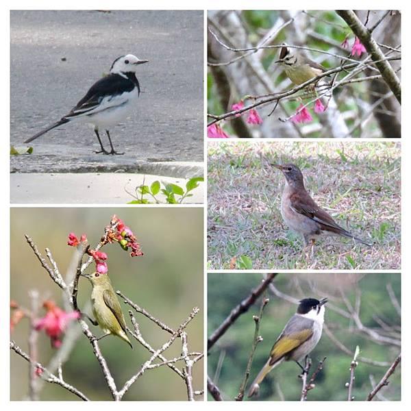 布洛灣其他鳥.jpg