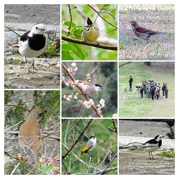 布洛灣其他鳥1.jpg