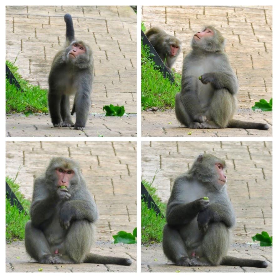 獼猴溜滑梯013.jpg