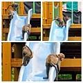 獼猴溜滑梯006.jpg