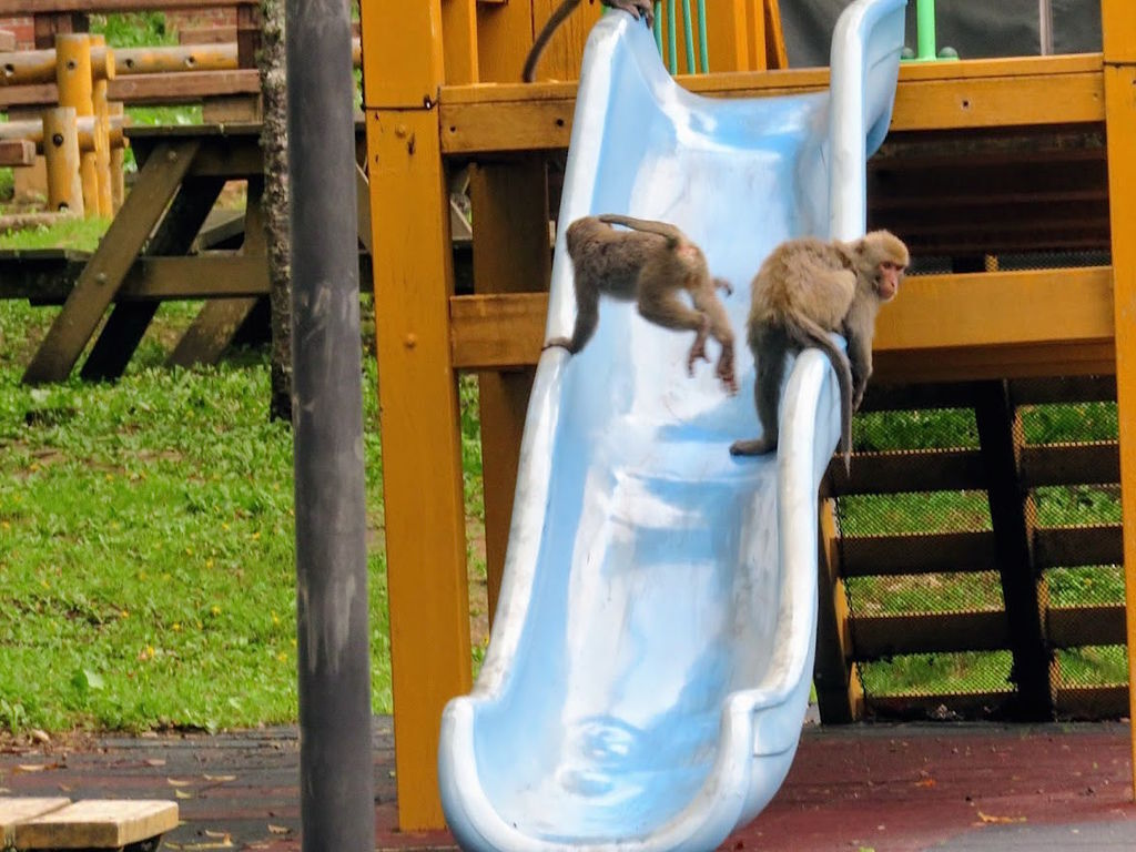 獼猴溜滑梯003.jpg