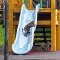 獼猴溜滑梯004.jpg