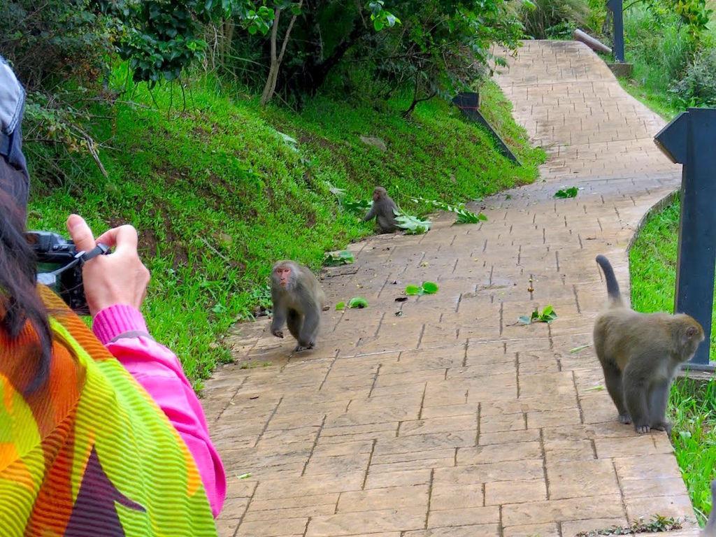 獼猴溜滑梯010.jpg