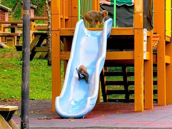 獼猴溜滑梯001.jpg
