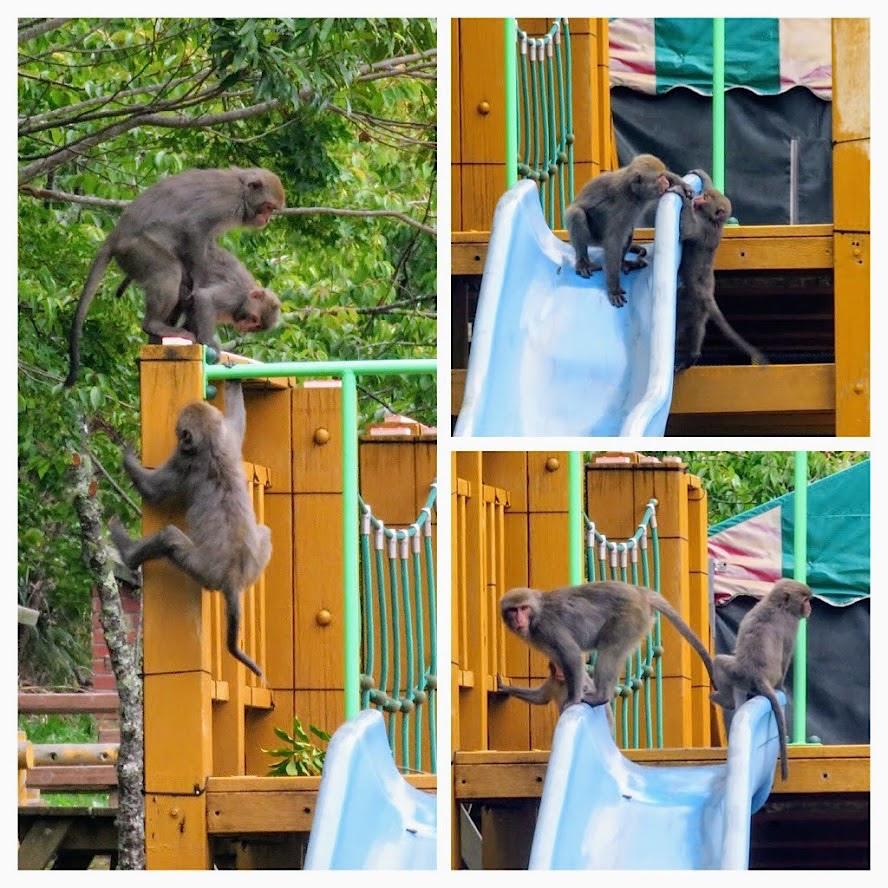 獼猴溜滑梯005.jpg