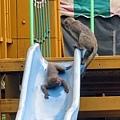 獼猴溜滑梯002.jpg