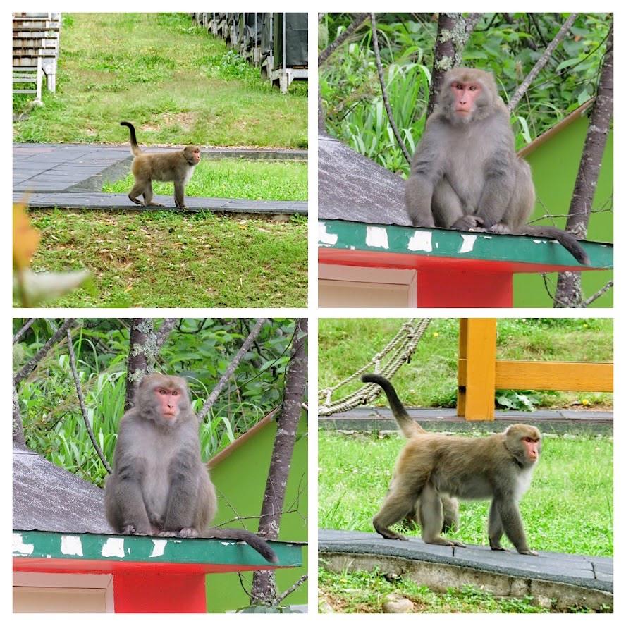 獼猴溜滑梯009.jpg