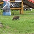 獼猴溜滑梯008.jpg