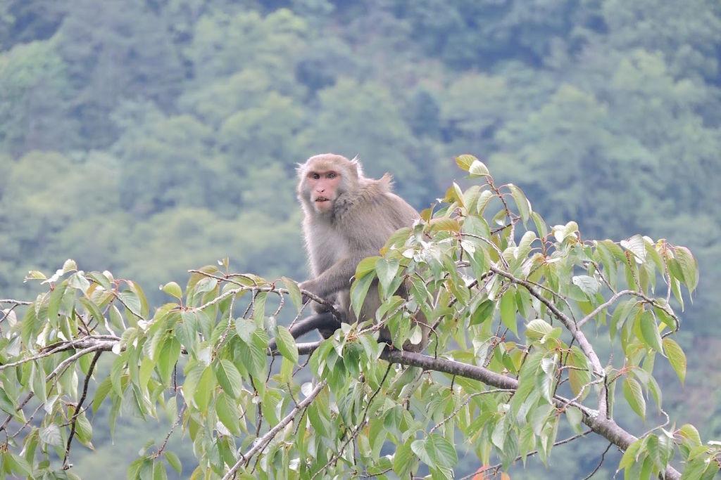 獼猴溜滑梯011.jpg