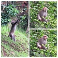 獼猴溜滑梯012.jpg